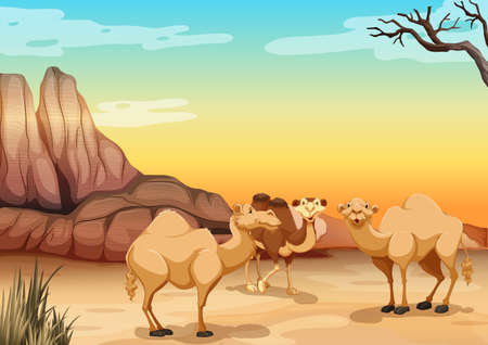 desert sunset: Camels living in the desert illustration Illustration