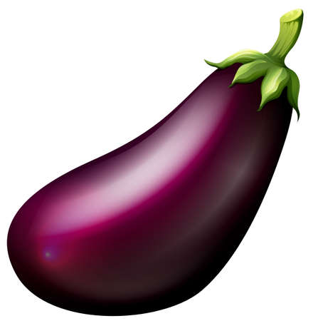 Purple eggplant on white illustration