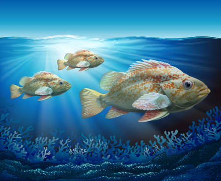 reef fish: Groupers swimming in the ocean illustration