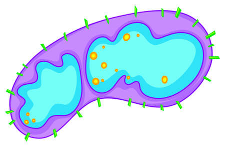 bacteria: Bacteria in large detail illustration