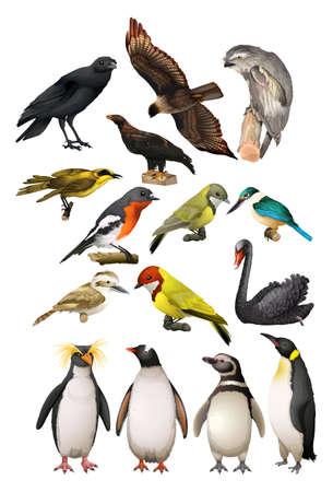 Different kind of birds illustration