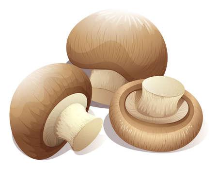 mushroom: Seta fresca en tres piezas de ilustraci�n