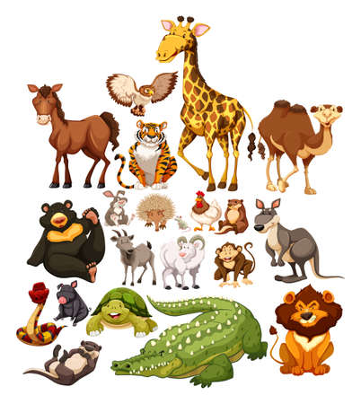 isolated animal: Different type of wild animals illustration Illustration