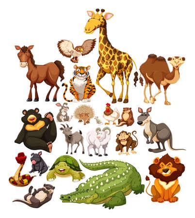 állatok: Különböző típusú vadon élő állatok illusztráció