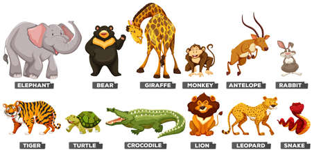 safari animals: Wild animals in many types illustration