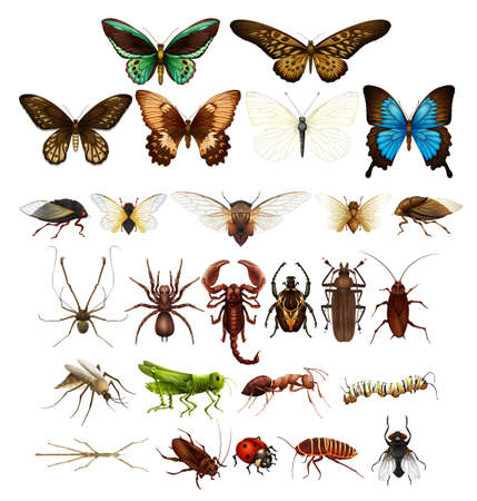 Wild insects in various types illustration Ilustração