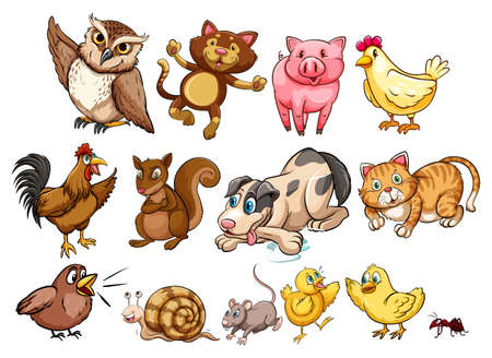 wild cat: Different type of farm animal and pet illustration