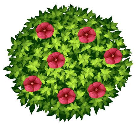 buisson: Les fleurs rouges sur Bush ronde illustration
