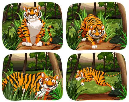 cazador: Tigre viven en la ilustración de la selva