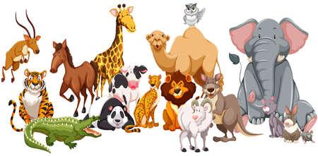 állatok: Másfajta vadon élő állatok illusztráció
