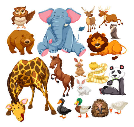 young animal: Wild animals on white illustration