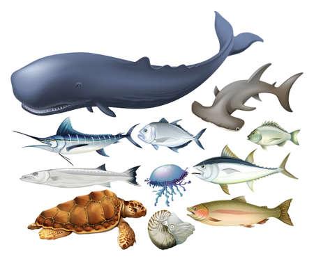 白図の水生動物