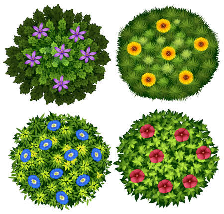 bush trimming: Bushes with colorful flowers illustration
