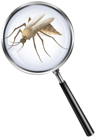 bugs: Mosquito through magnifying glass illustration