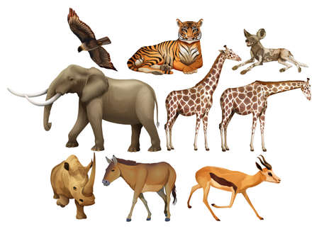 Various kind of wild animals illustration Illustration