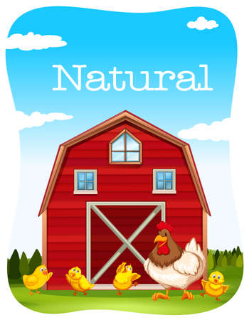 rural scene: Chicken and red barn  illustration Illustration
