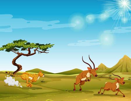 Cheetah chasing deers in the savanna illustration