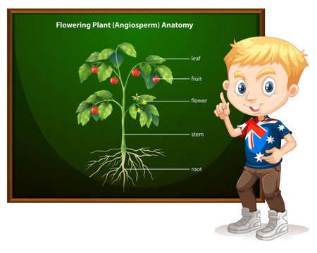 stems: Little boy and flowering anatomy illustration