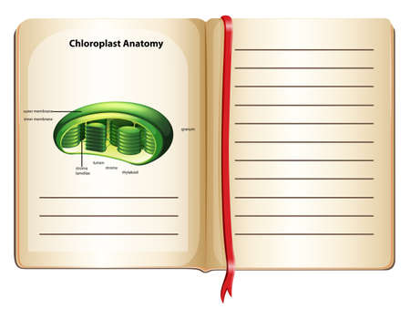 chloroplast: Book with chloroplast anatomy on page illustration