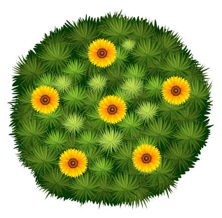 flower close up: Round bush with yellow flower illustration