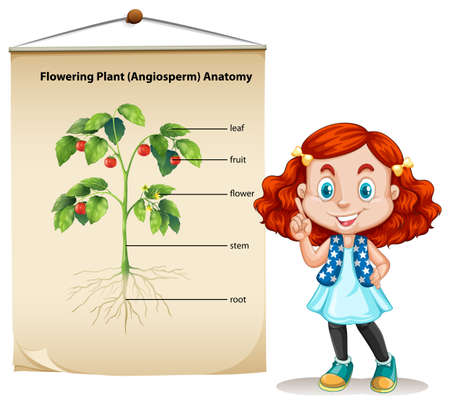 happy children: Little girl and plant anatomy illustration