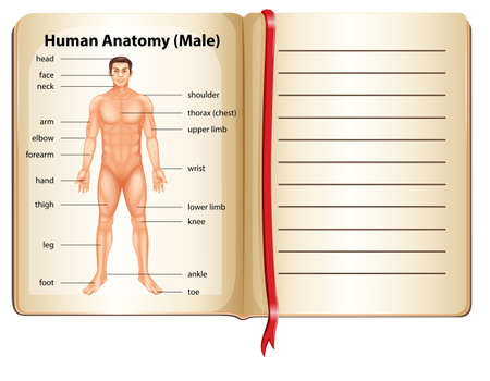 Human anatomy on a page illustration