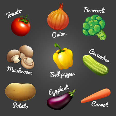 the fungus: Fresh vegetables with names illustration