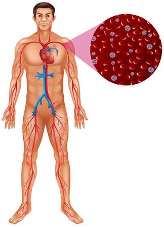 Blood circulation in human body illustration Illustration