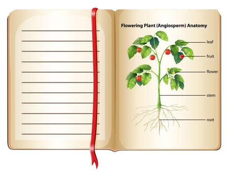 raices de plantas: Anatomía de las plantas de floración en la página ilustración Vectores