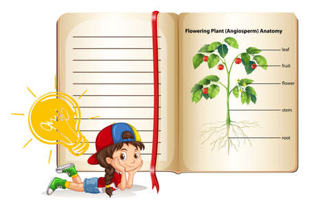 flowering plant: Girl and flowering plant anatomy illustration