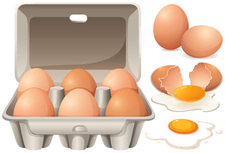 Raw chicken eggs and yolk illustration