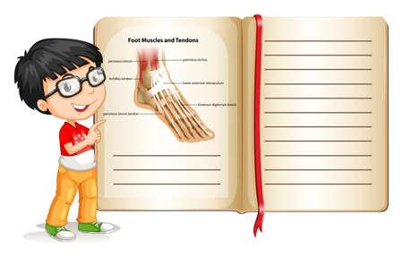tendones: M�sculos del pie y los tendones en la p�gina ilustraci�n