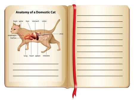 anatomy heart: Anatomy of a domestic cat illustration