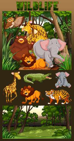living: Wildlife living in the forest illustration Illustration