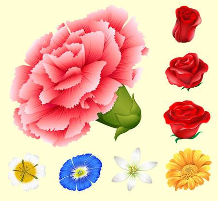 blue roses: Various kind of flowers illustration