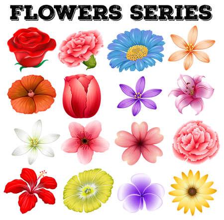 flor caricatura: Diferentes tipos de flores ilustración