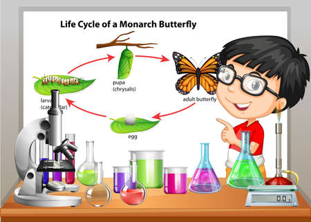 biology lab: Boy presenting life cycle of butterfly illustration