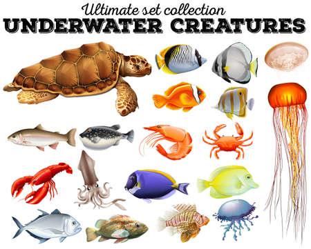 carnivorous fish: Different kind of sea animals illustration Illustration