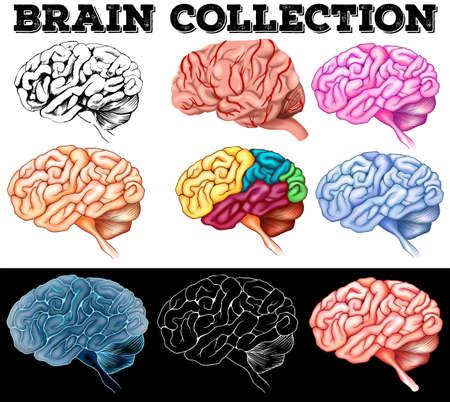 white matter: Different design of human brain illustration Illustration