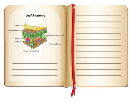 plant cell: Notebook and leaf anatomy on page illustration