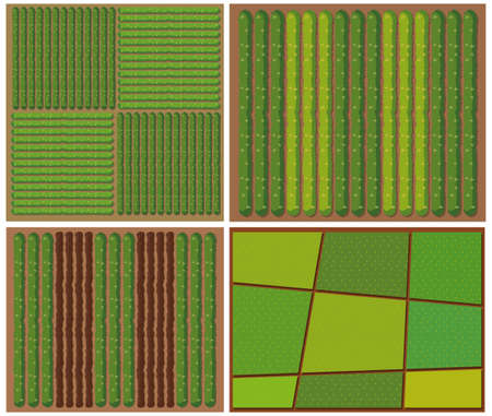 crops: Pattern of crops from top view illustration