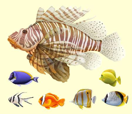 peces: Diferentes tipos de ejemplo de los pescados Vectores