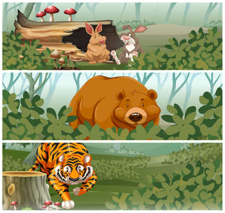 animales salvajes: Wild animals in the jungle illustration