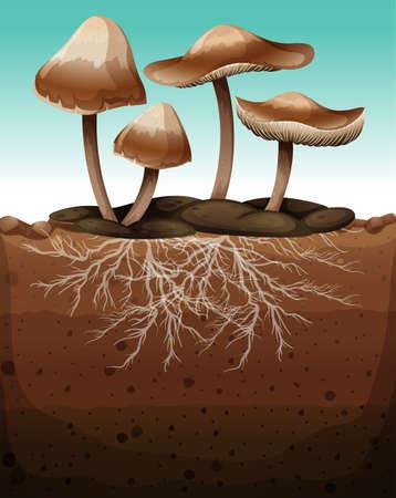 the fungus: Fresh mushroom with roots underground illustration Illustration