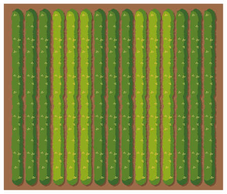 agricultural: Row of vegetables from topview illustration