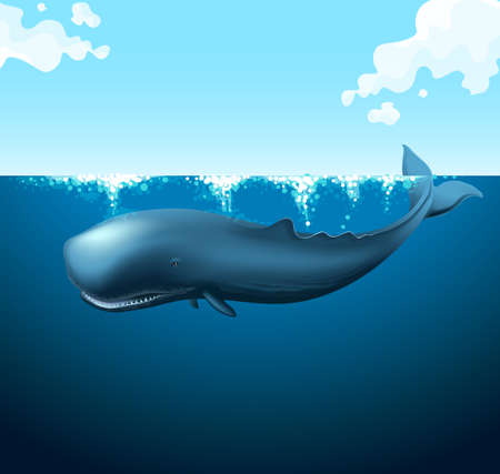blue whale: Blue whale swimming in the ocean illustration Illustration