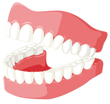 Dental theme with teeth model illustration