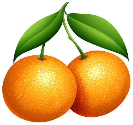 Oranges with green leaves illustration Ilustração