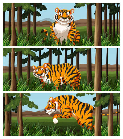 tropical tree: Wild tiger living in the jungle illustration