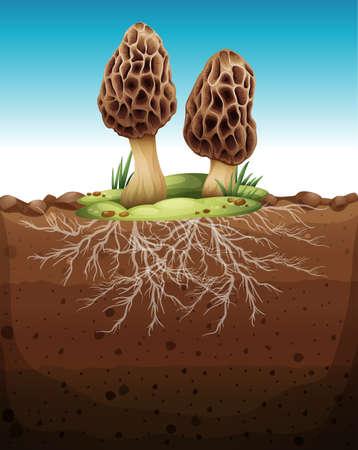 underground: Mushroom growing from underground illustration